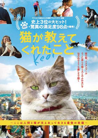 「猫が教えてくれたこと」のポスター/チラシ/フライヤー